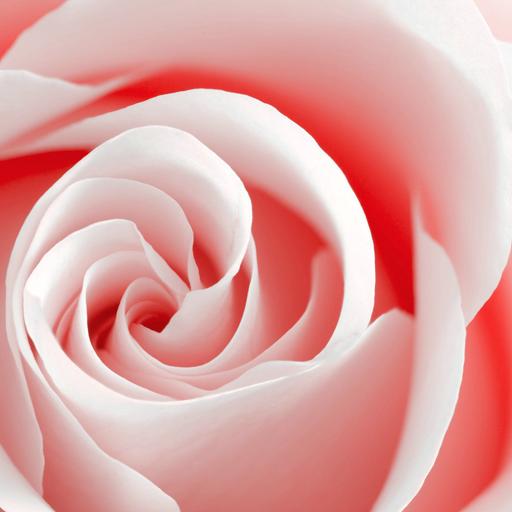 Розовый бутон - опера